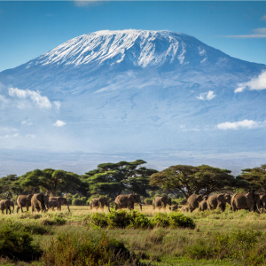 Climb Kilimanjaro for Julian House