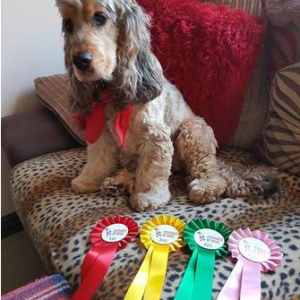 The Surrey Festivals of Dogs and Nonsuch Town and Country Show