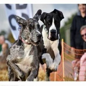 Framlingham Festivals of Dogs