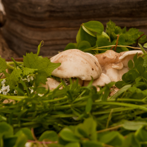 Warlingham Foraging Courses