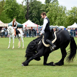 The Nonsuch Town and Country Show and Surrey Festivals of Dogs