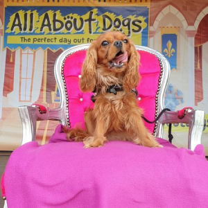 All About Dogs Show Newbury 2021