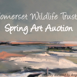 Somerset Wildlife Trust's Virtual Spring Art Auction