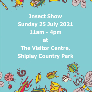 Insect Show