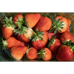 Pick your own Strawberries at Manor Farm Fruits