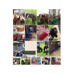 Ride & Play Sessions at Paddock Pony Parties
