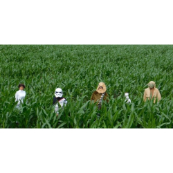 'Baah Wars' Maize Maze @ Lower Drayton Farm