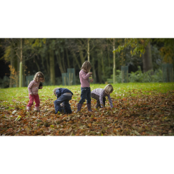 October half-term at Mottisfont