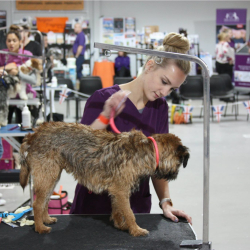 British Dog Grooming Championships