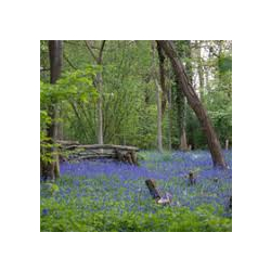 Radley Large Wood: Monks, Deer, Riots, Canal and Bluebells