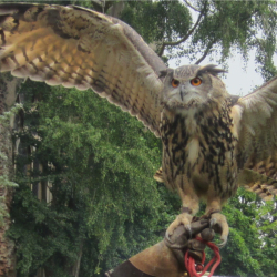 Medieval Falconry Day