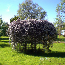St Margaret's Hospice Open Gardens – Little Orchard, East Huntspill