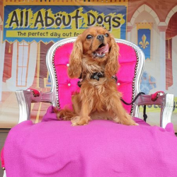All About Dogs Show Newark 2020
