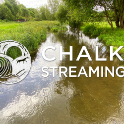 Nature Walk: Chalk Streaming - Rivers Cray, Darent and Thames