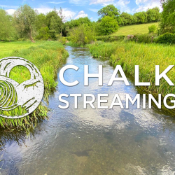 Nature Walk: Chalk Streaming - River Chess