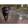 Weekly Dog Walks St Neots - Saturday Mornings