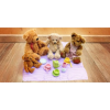 Teddy Bear's Picnic at Eddie Catz Newbury Berkshire