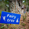 Enchanted Fairy Tree Trail