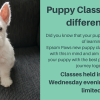 POSTPONED Puppy Socialisation Classes with Epsom Paws
