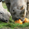 Kids go Half Price this October Half term at Port Lympne Hotel & Reserve!