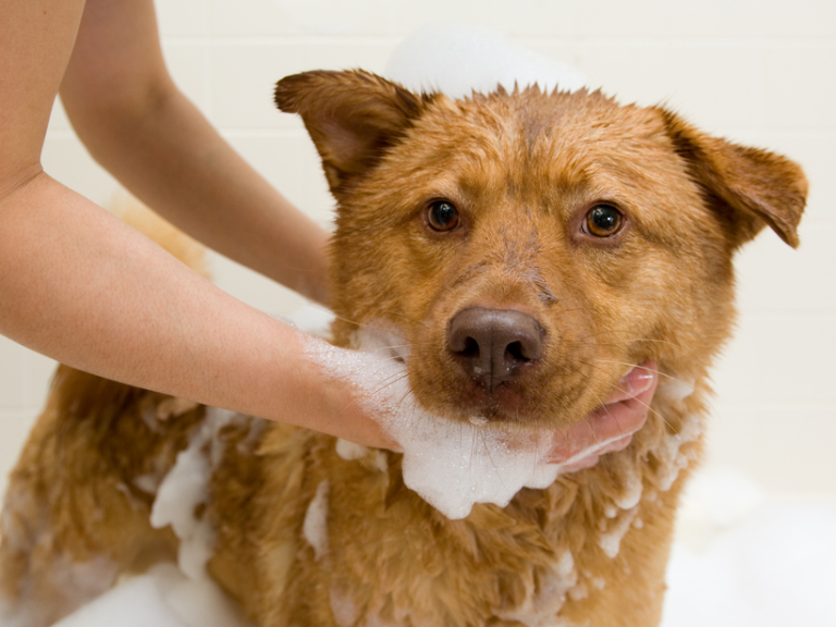 The dogs corner holistic dog centre dog grooming and services solutioingenieria Choice Image