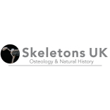 Skeletons UK