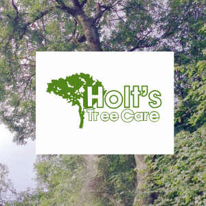 tree surgeon telford