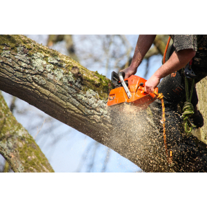 Nunhead T C; Tree Surgeon Surrey Quays