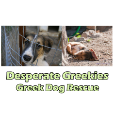 Desperate Greekies Greek Dog Rescue