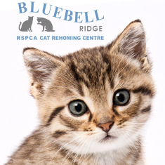 Bluebell Ridge RSPCA Cat Rehoming Centre