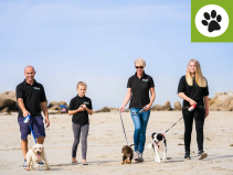 15% OFF DOG WALKING AND CANICROSS SESSIONS WITH TOP DOG