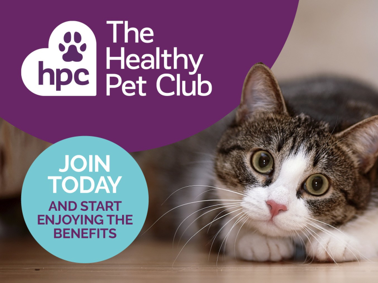 SAVE OVER £200 A YEAR ON YOUR PET'S HEALTHCARE