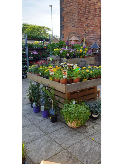 Upgrade your garden for Summer with School Farm Shop!