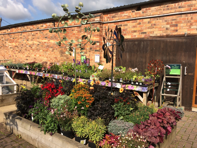 Autumn Magic Shrubs - 3 for £20