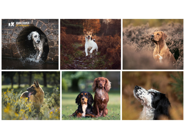 50% off Dog Portrait Sessions at John Cooper Pet Photography!