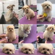 FREE First Puppy Groom at Grrs Grooming!