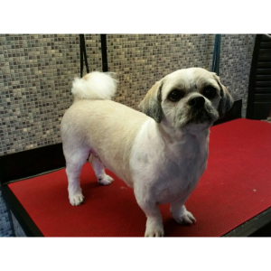 10% OFF MOBILE DOG GROOMING!
