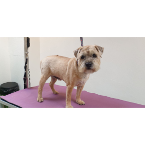 FREE Puppy Groom at Grrs Great Grooming