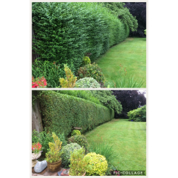 10% Off Hedge Trimming